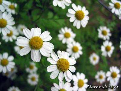 foabl1 - کمر درد + گیاهان دارویی موثر برای درمان کمر درد 1