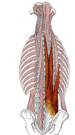 راستکننده ستون مهرهها min - گرفتگی عضلات کمر + نحوه درمان اسپاسم عضلانی