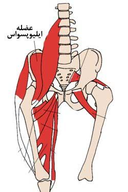 خاصرهای مازویی یا عضله ایلیوپسواس min - گرفتگی عضلات کمر + نحوه درمان اسپاسم عضلانی