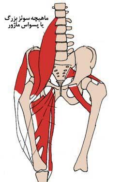 سوئز بزرگ یا پسواس ماژور min - گرفتگی عضلات کمر + نحوه درمان اسپاسم عضلانی