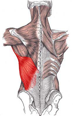 پشتی بزرگ لاتیسموس دورسی min - گرفتگی عضلات کمر + نحوه درمان اسپاسم عضلانی